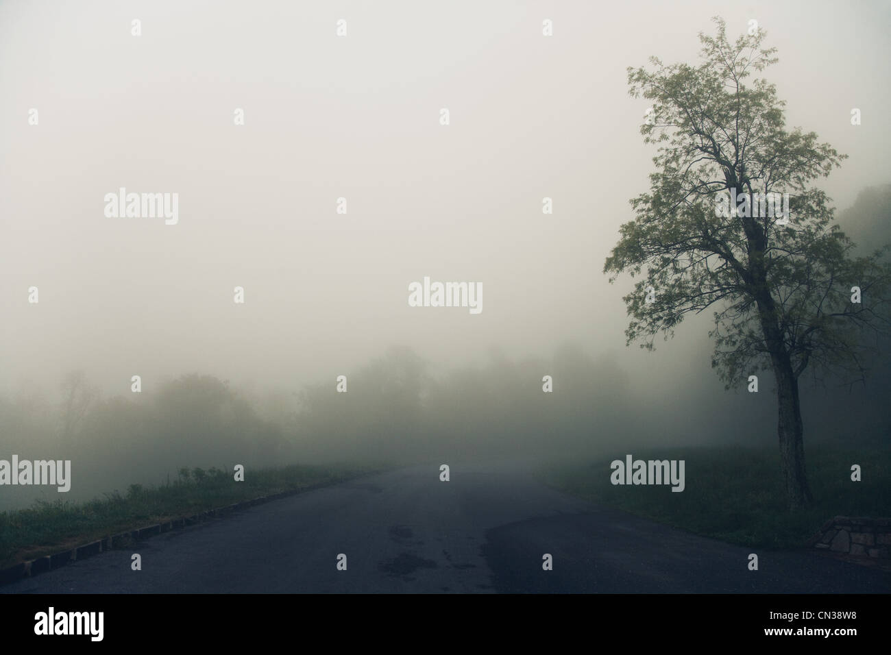 Tree and road in fog, Virginia, USA - Stock Image