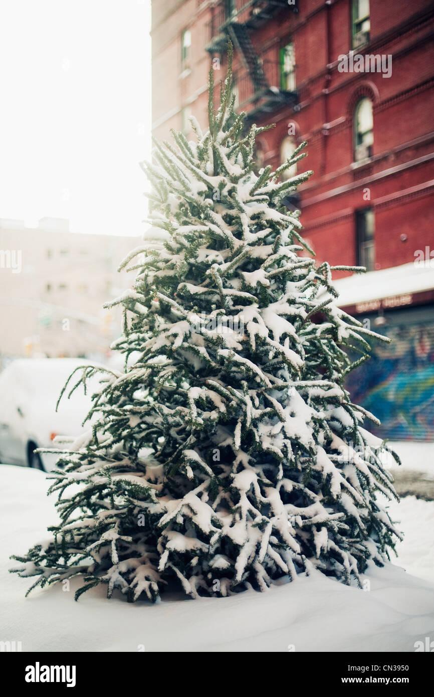 Snow-covered christmas tree - Stock Image