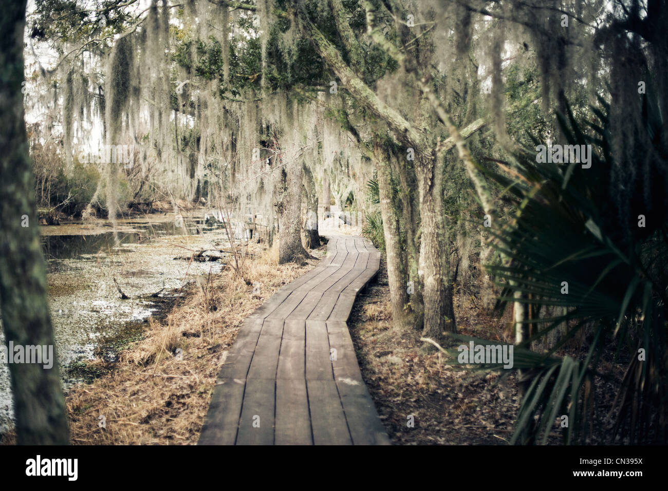Walkway through swamp, New Orleans, Louisiana, USA - Stock Image