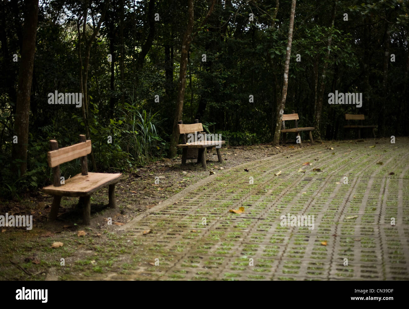 Benches in forest, Mt Kinabalu, Malaysia - Stock Image
