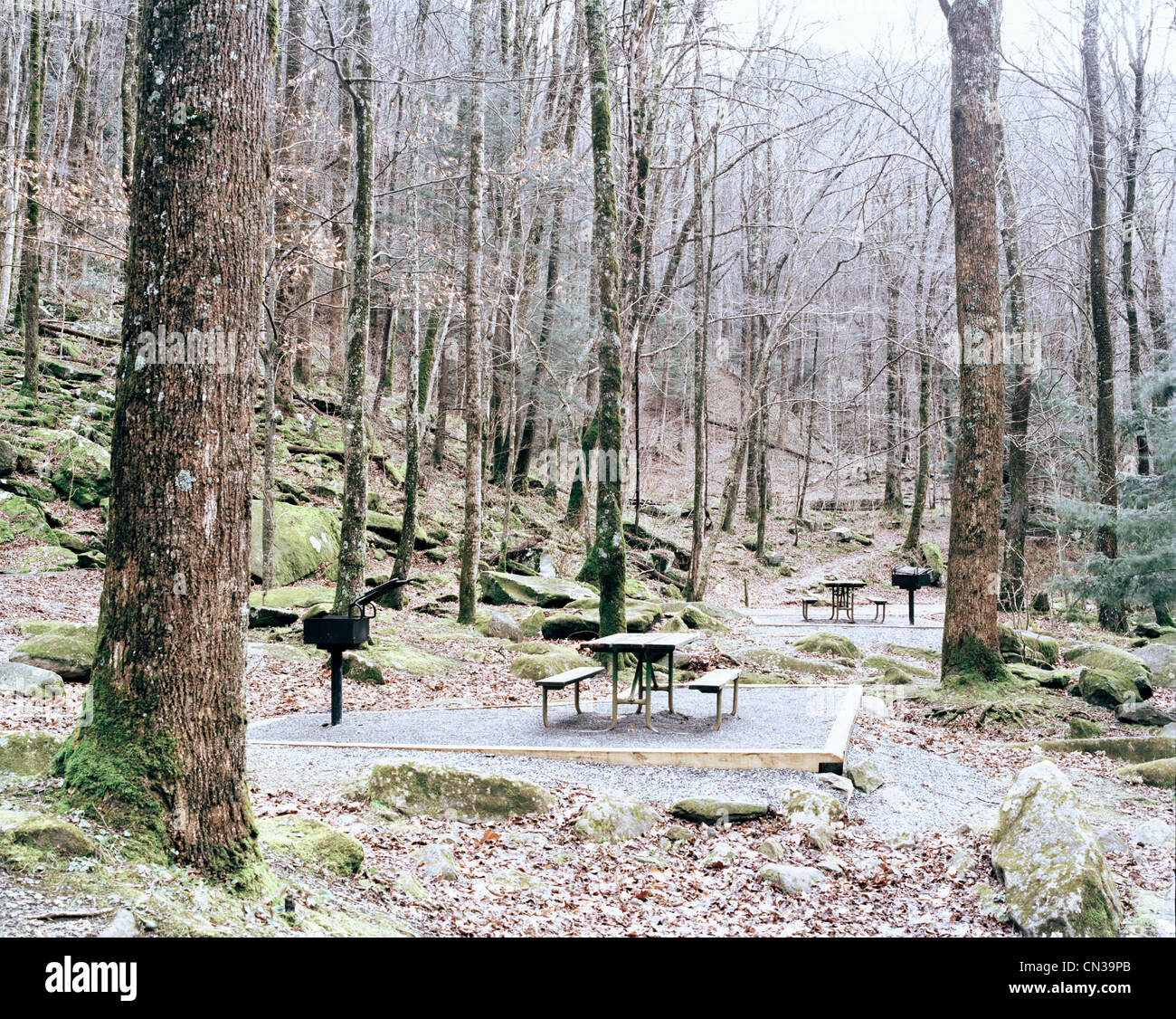 Picnic tables in forest, Pennsylvania, USA - Stock Image