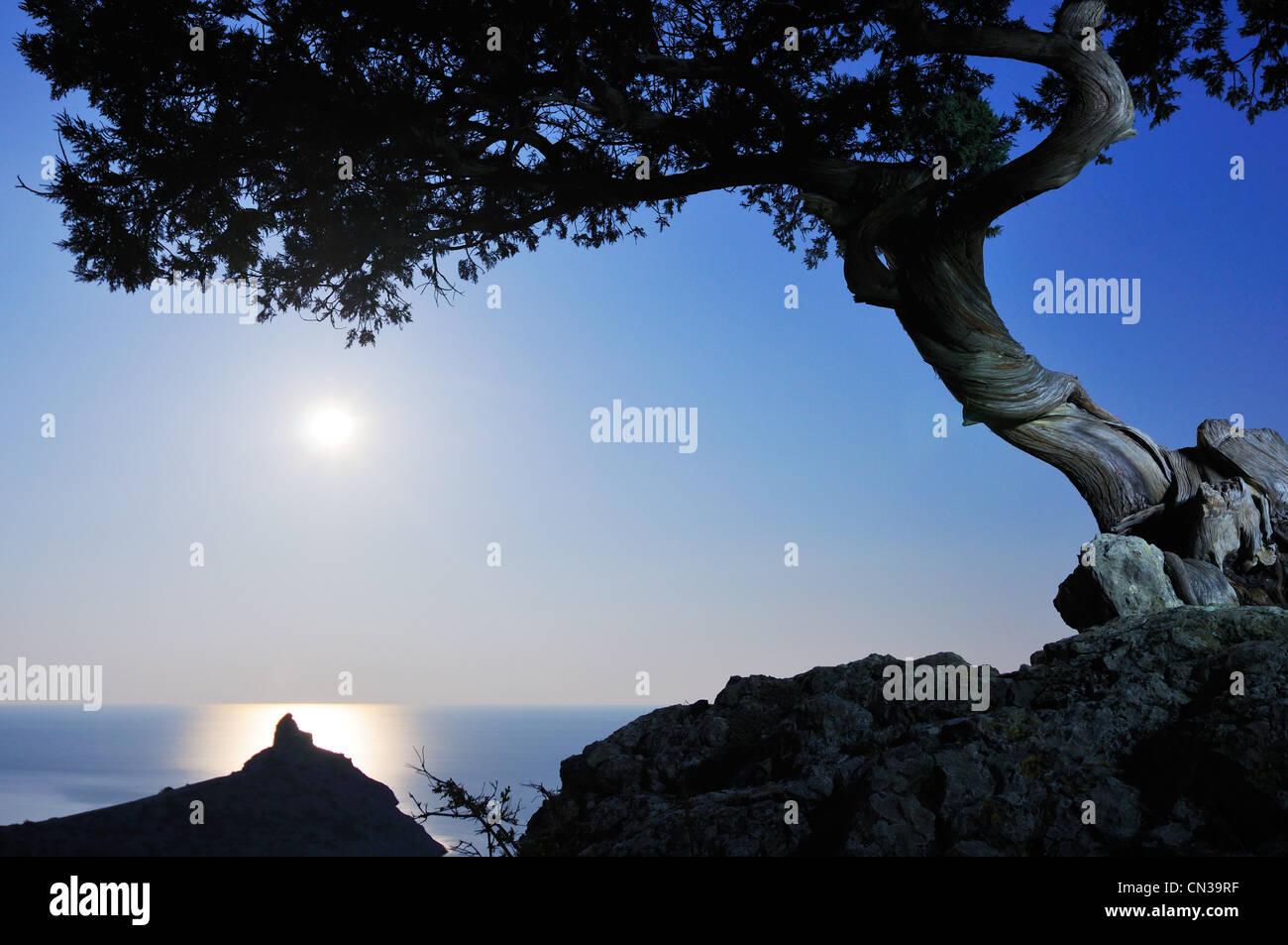 Juniper tree and Black Sea in moonlight, Novyi Svit village area, Crimea, Ukraine - Stock Image
