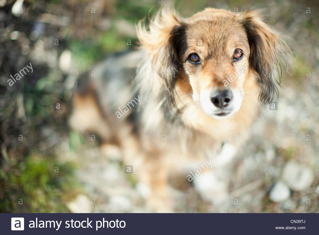 Portrait of a pet dog - Stock Image