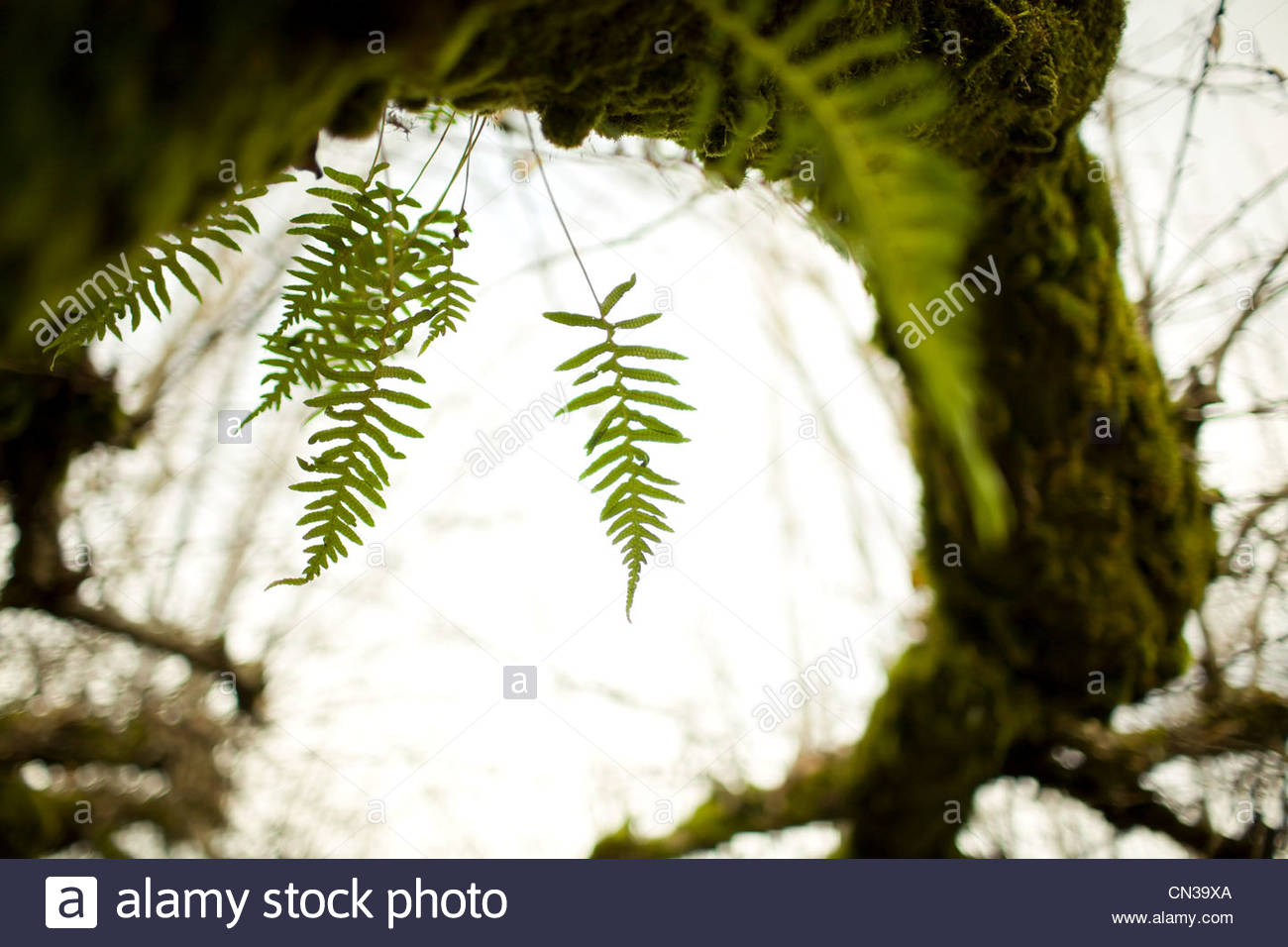 Green moss and fern on tree - Stock Image