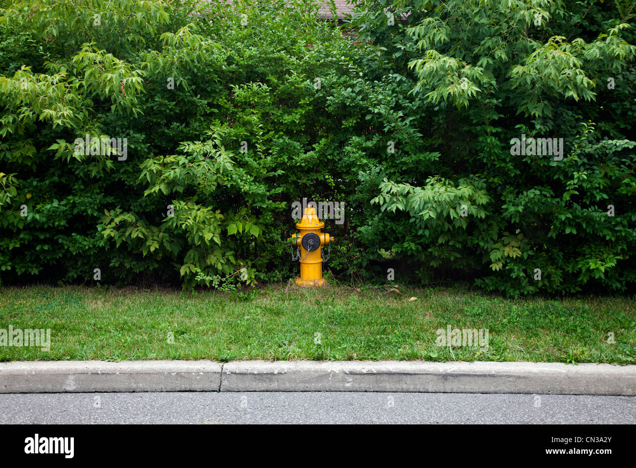 Fire hydrant on verge - Stock Image
