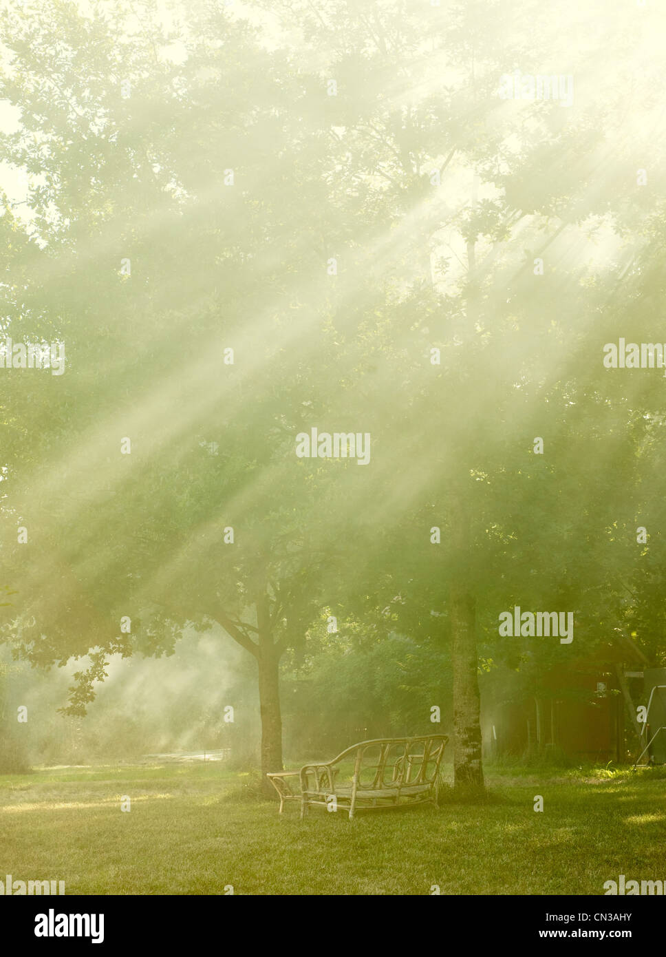 Outdoor furniture and trees in sunbeams - Stock Image