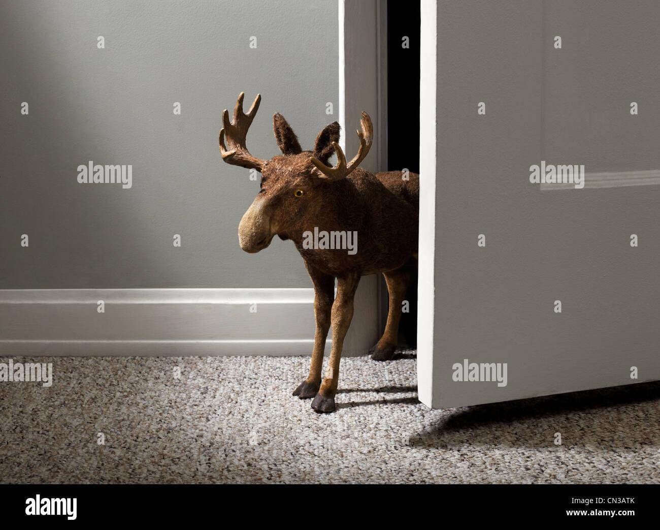 Toy moose in open door - Stock Image