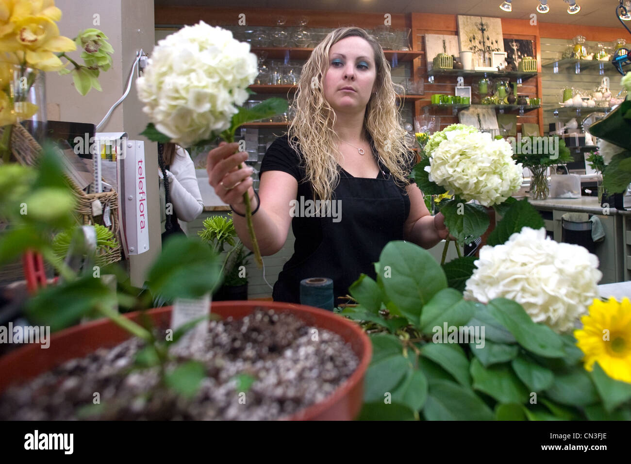 Employees at Boxwoods flower shop in London prepare for one of the busiest weeks of the year. - Stock Image