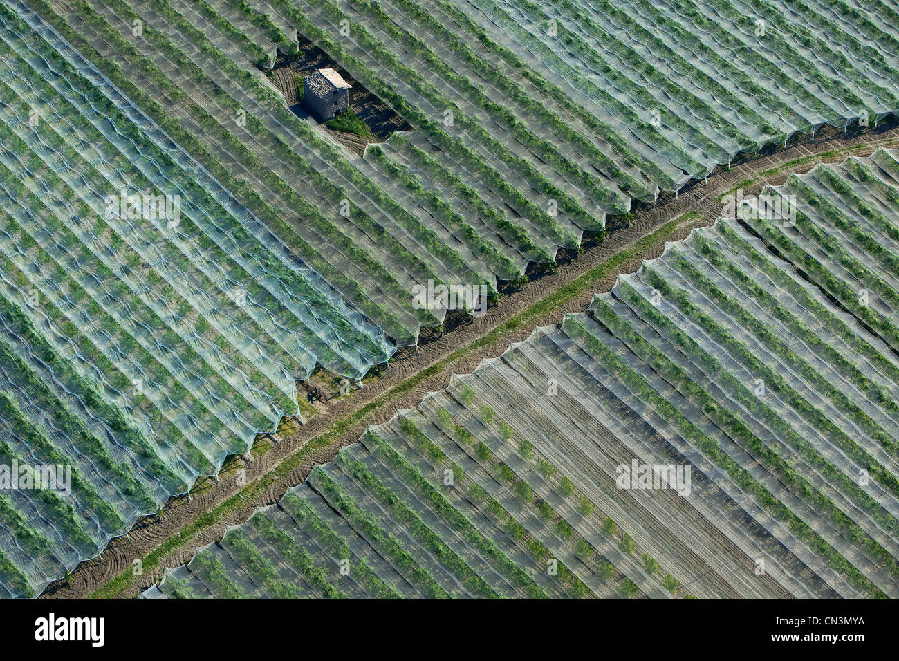 France Hautes Alpes Near Saulce Fruit Trees With Netting