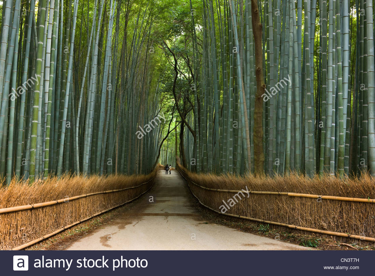 Bamboo pathway, Temple Garden District, Kyoto, Japan - Stock Image