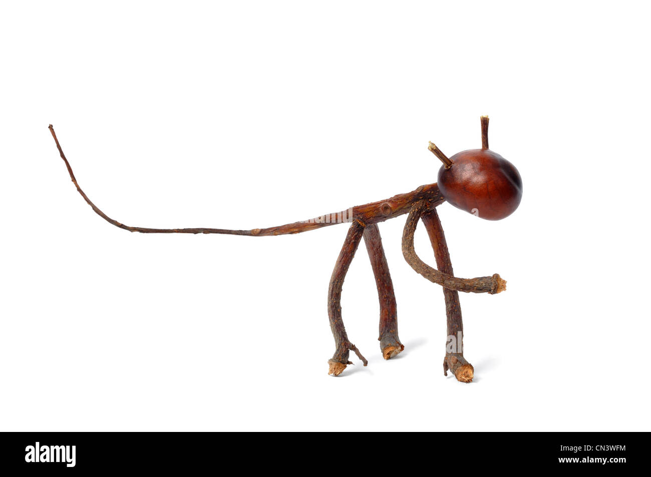 Toy made from chestnuts and matches on white background - Stock Image