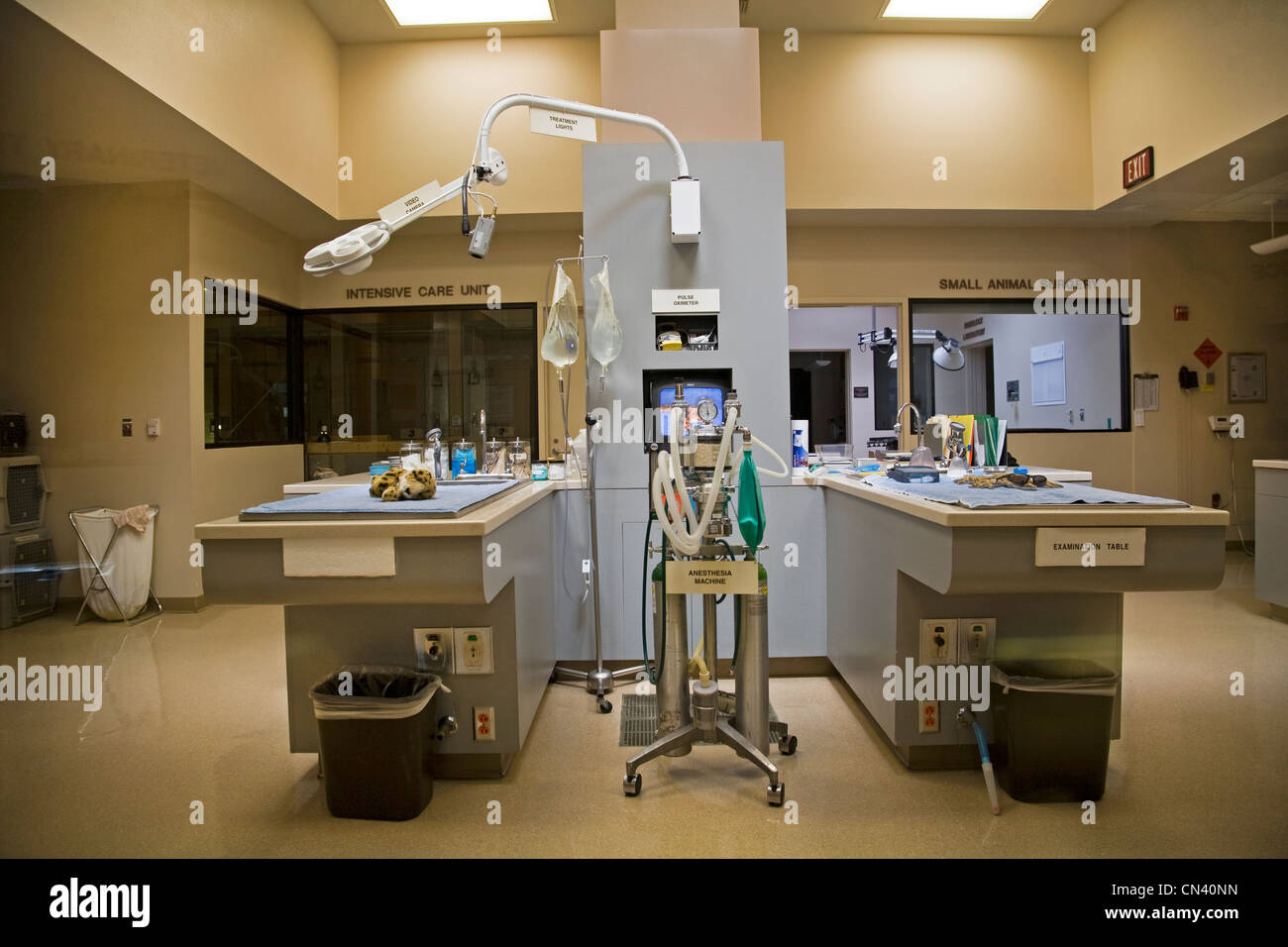 A veterinary surgery at an animal hospital in Palm Springs, California - Stock Image