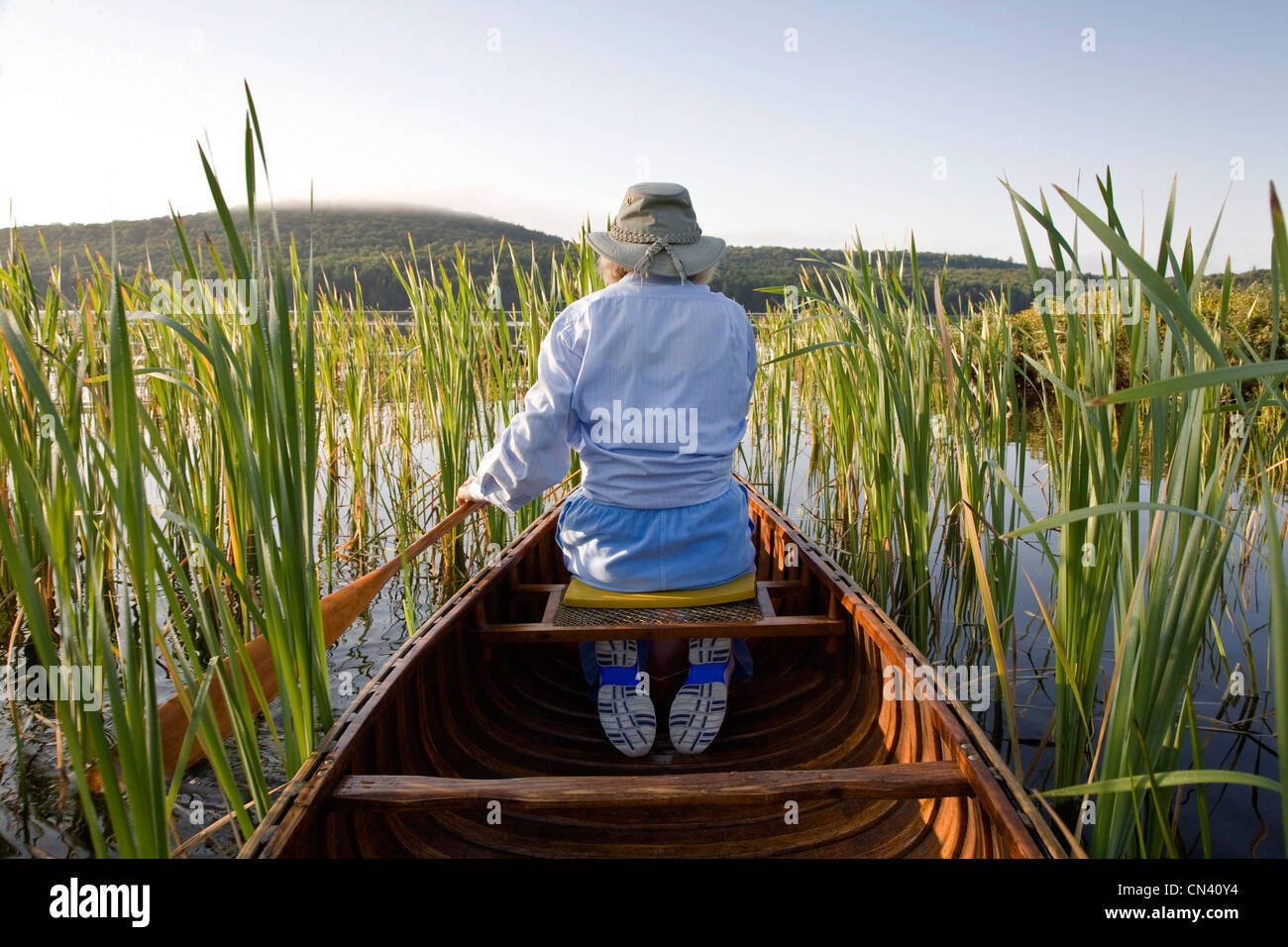 Woman paddling canoe through reeds, Smoke Lake, Algonquin Park, Ontario - Stock Image