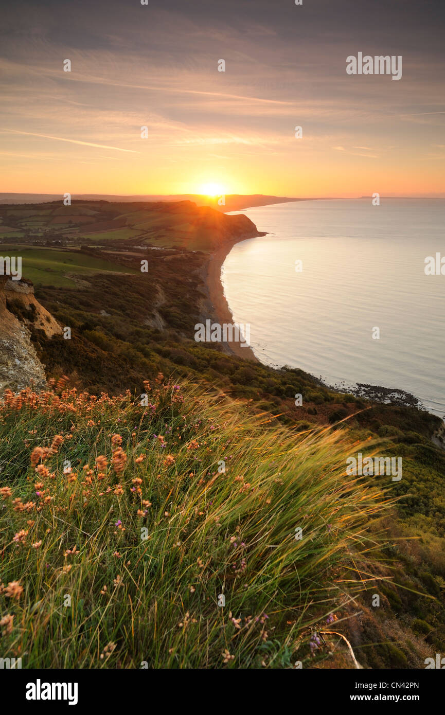 Windswept grass lit by the rising sun atop Golden Cap on the Jurassic Coastline of Dorset. - Stock Image