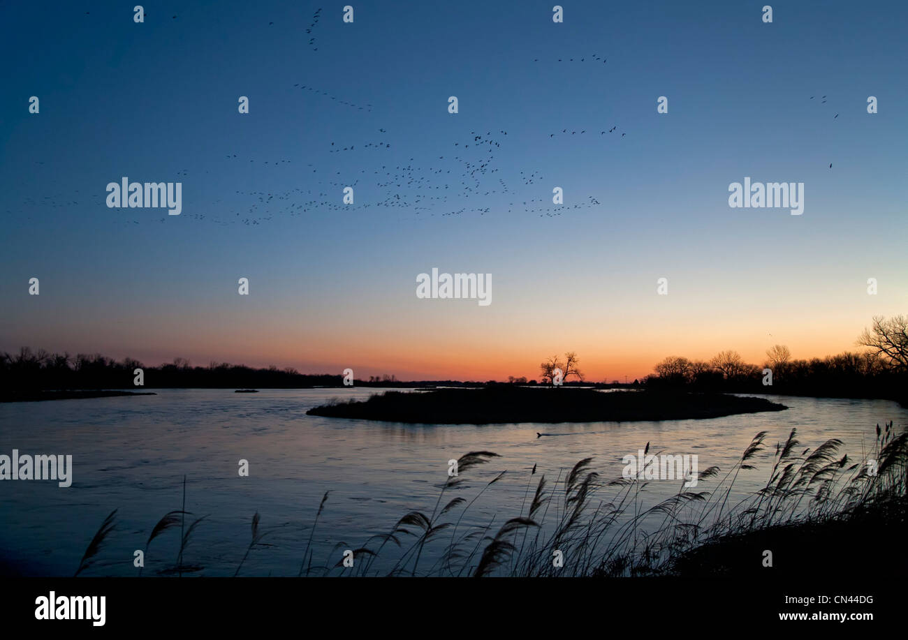 Sandhill cranes and other migratory birds fly over the Platte River at dawn Stock Photo