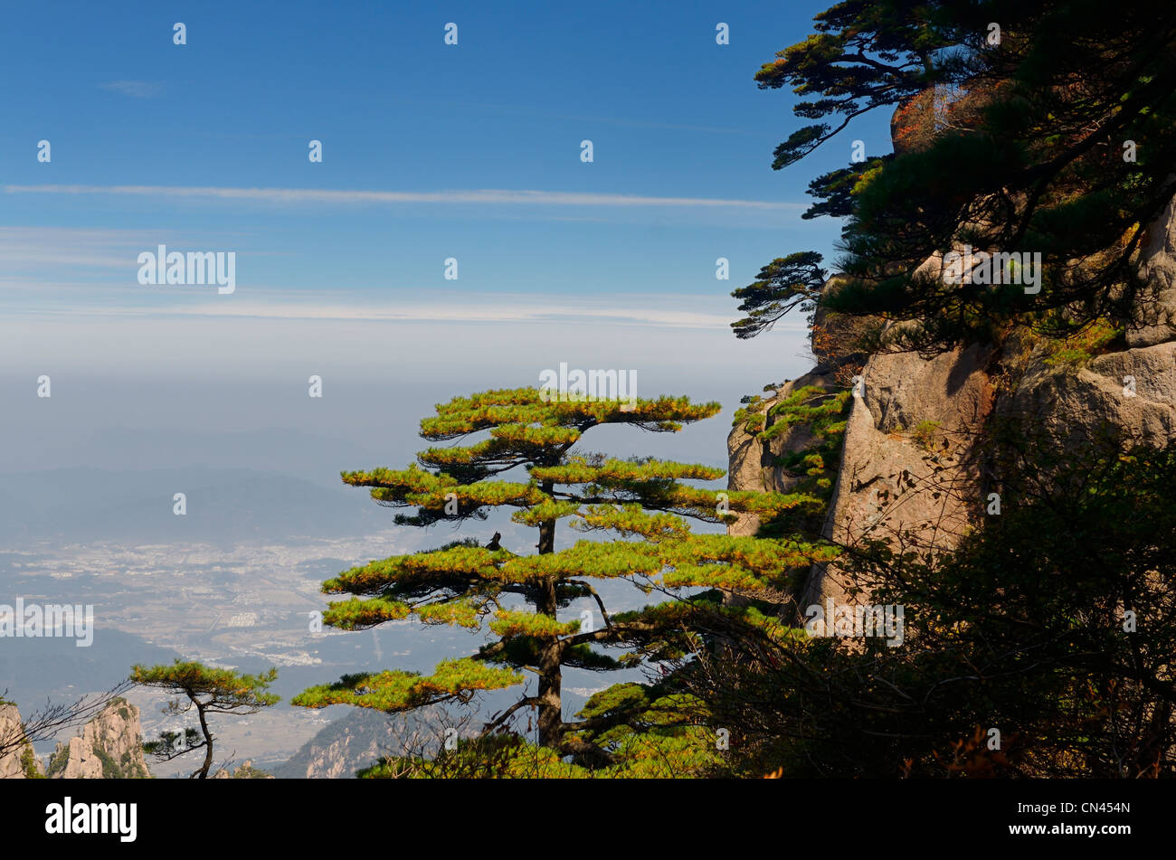 Pine trees on Beginning to Believe Peak over Gengchengzhen town at Yellow Mountain Huangshan China - Stock Image