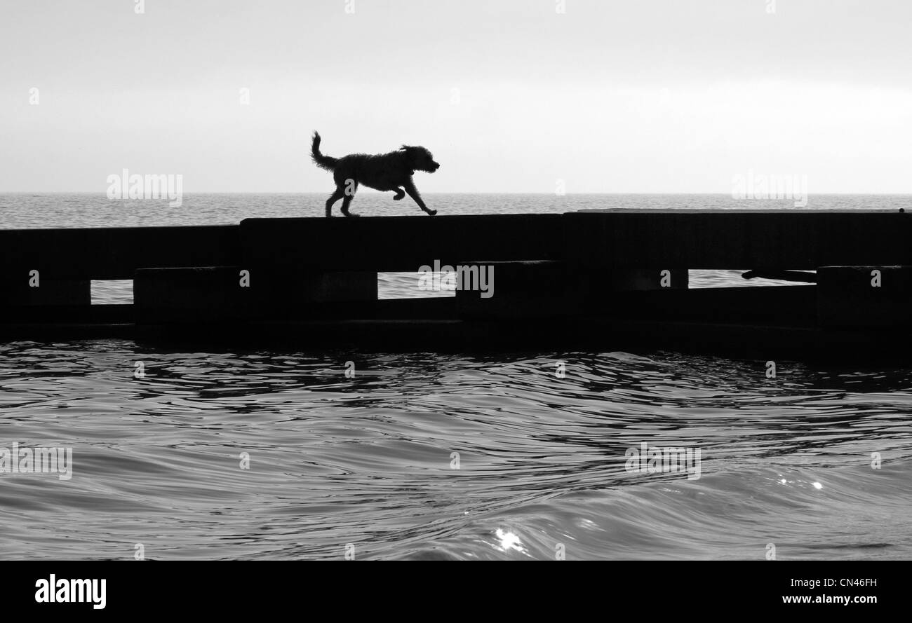 A dog runs along a pier in Lake Michigan. - Stock Image