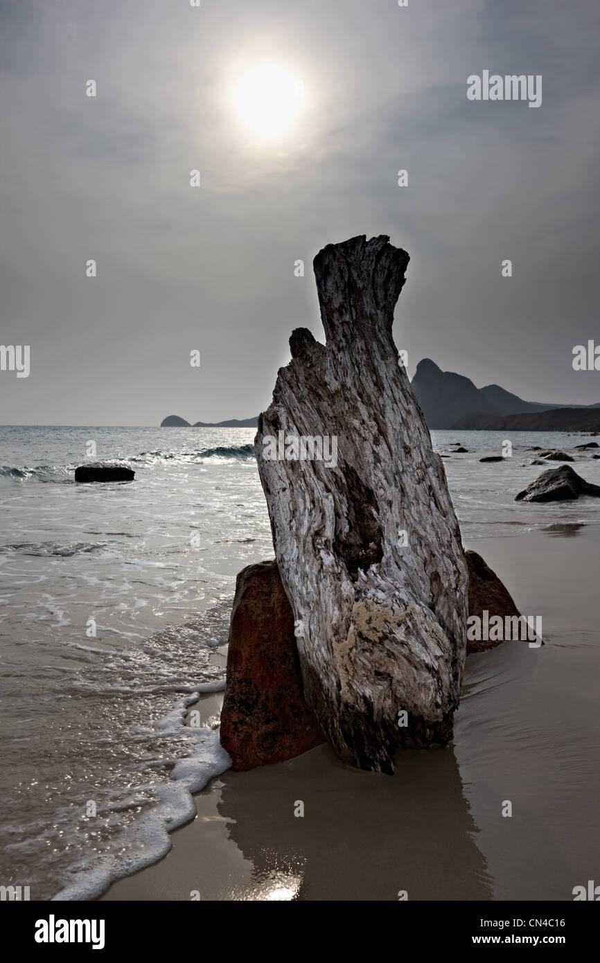 Driftwood on Bai Nhat Beach, Con Dao Island, Vietnam - Stock Image