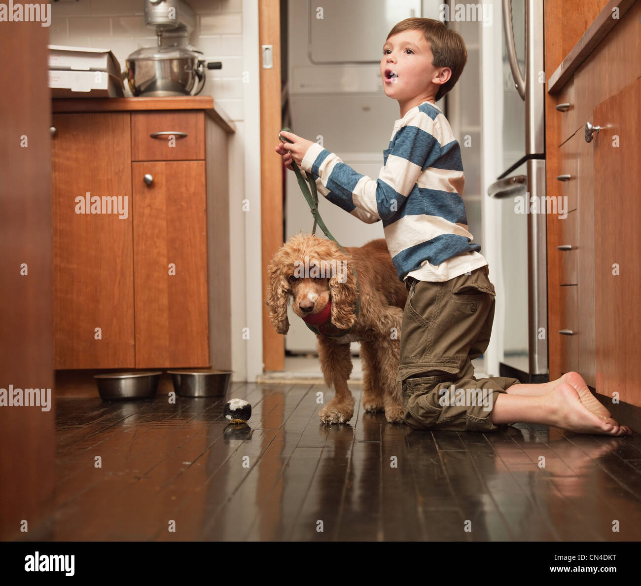 Boy holding lead of pet dog in kitchen - Stock Image
