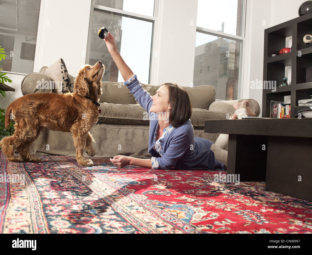 Mid adult woman teching pet dog in living room - Stock Image