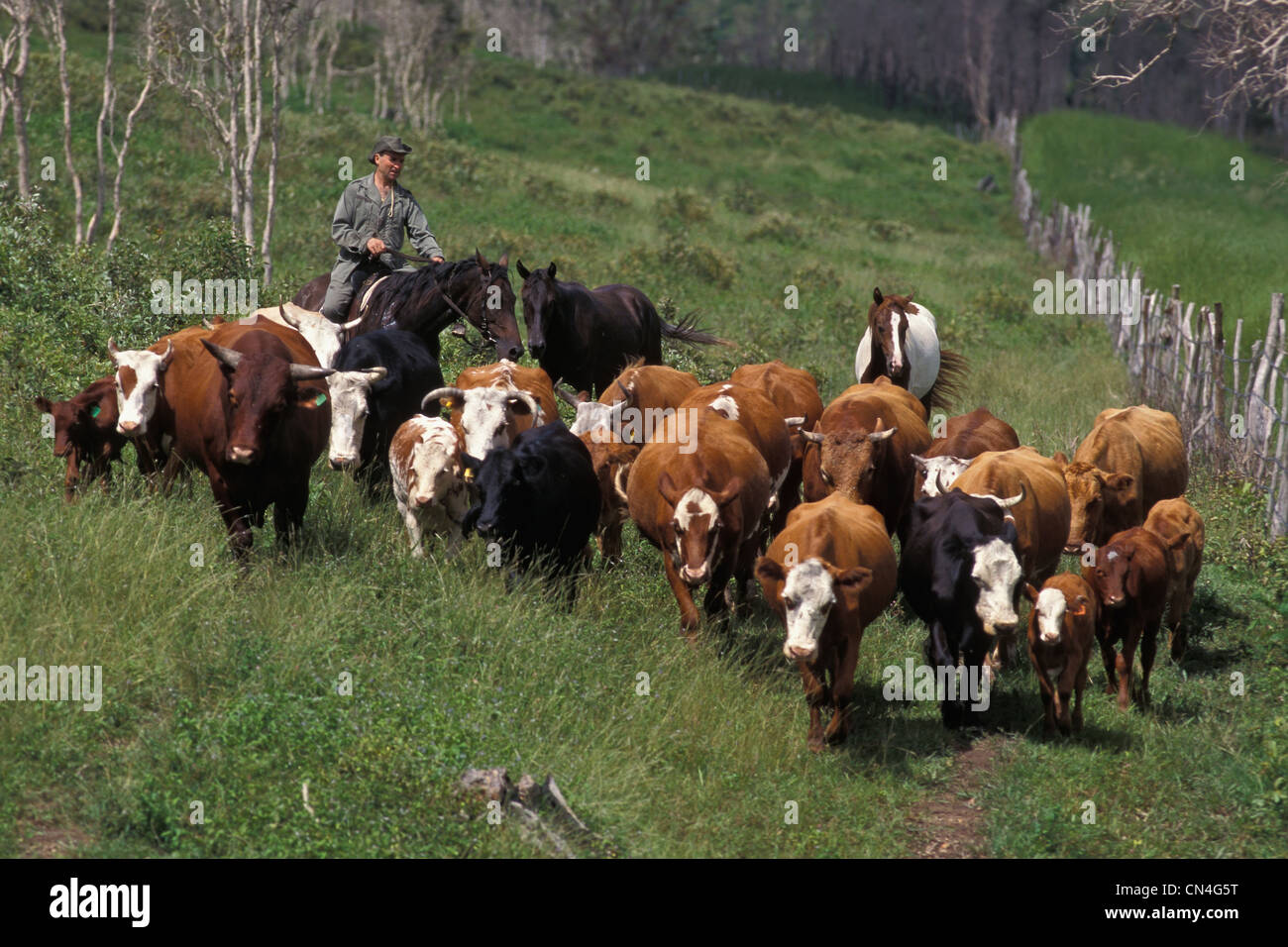 Stockman Stock Photos & Stockman Stock Images - Alamy