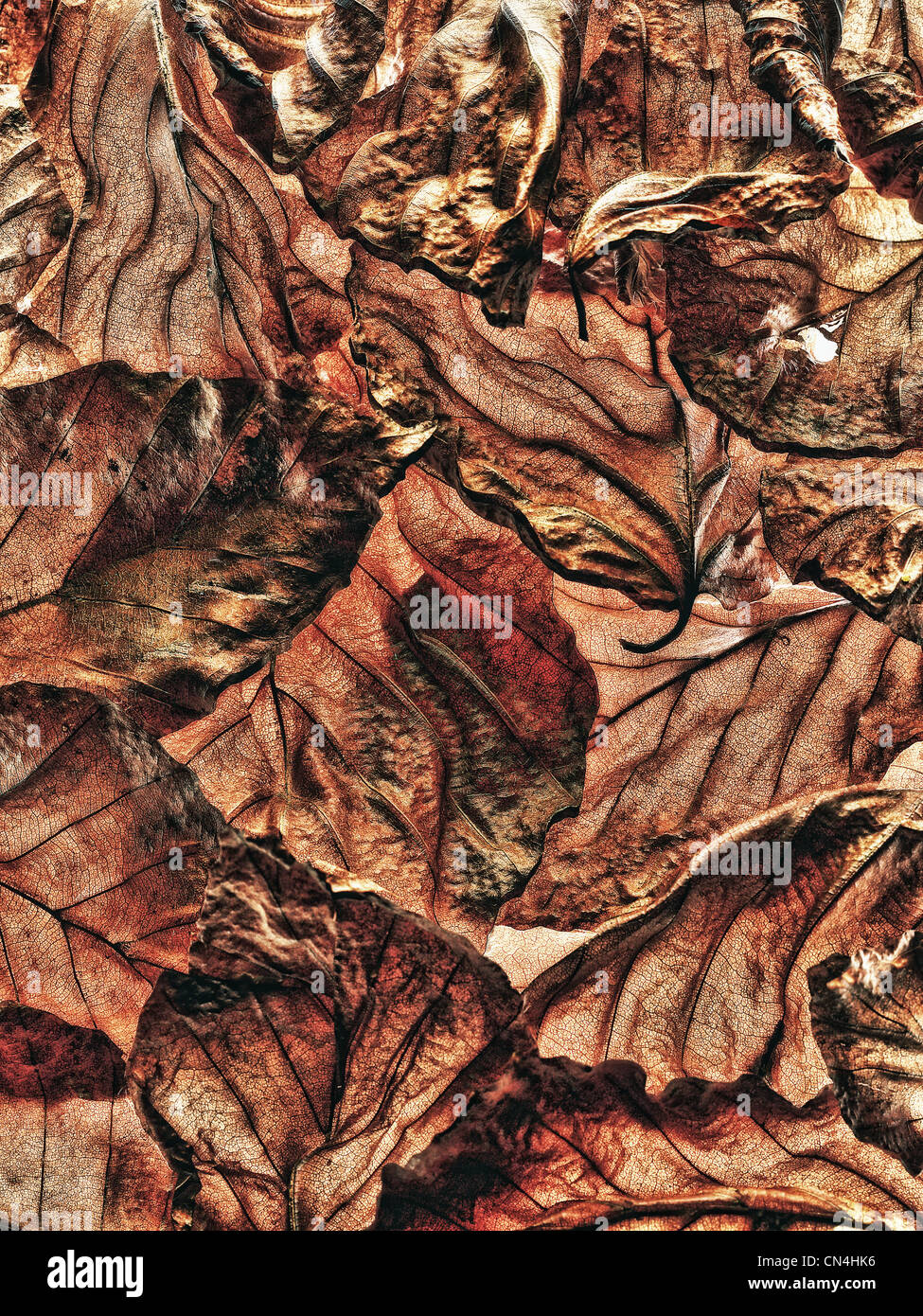 Pile of brown leaves - Stock Image