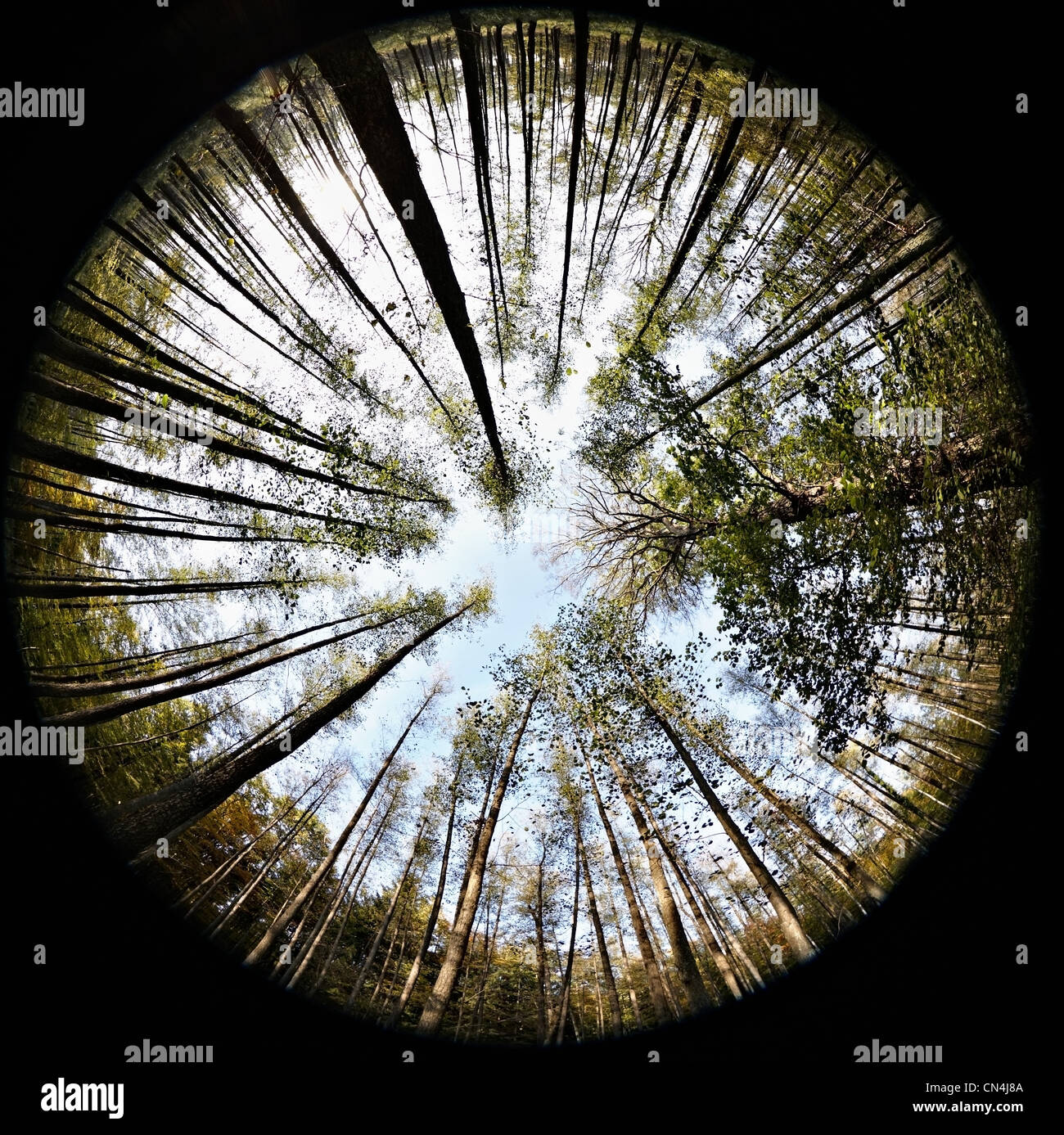Fisheye view of forest - Stock Image