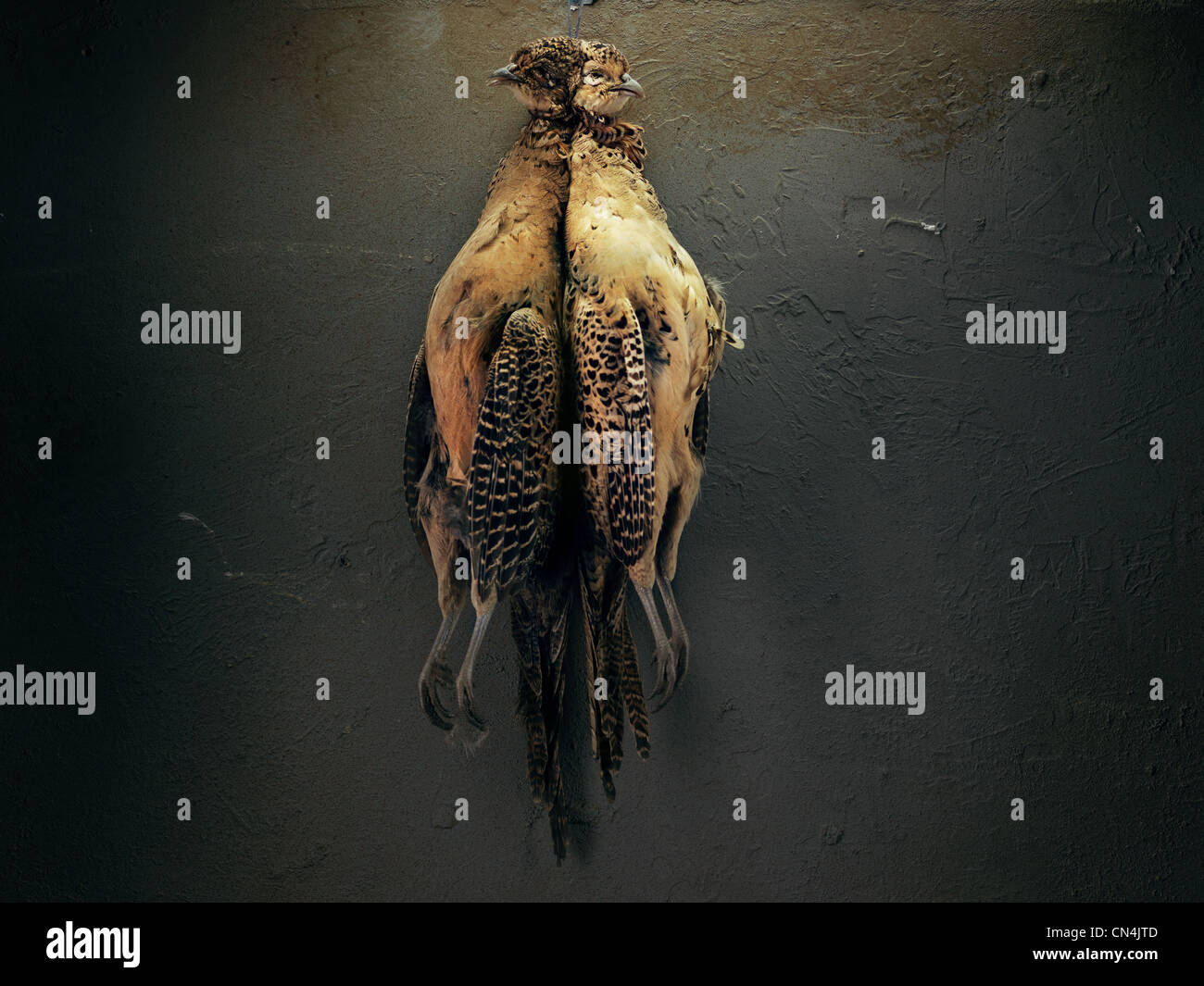 Two game birds hanging up - Stock Image