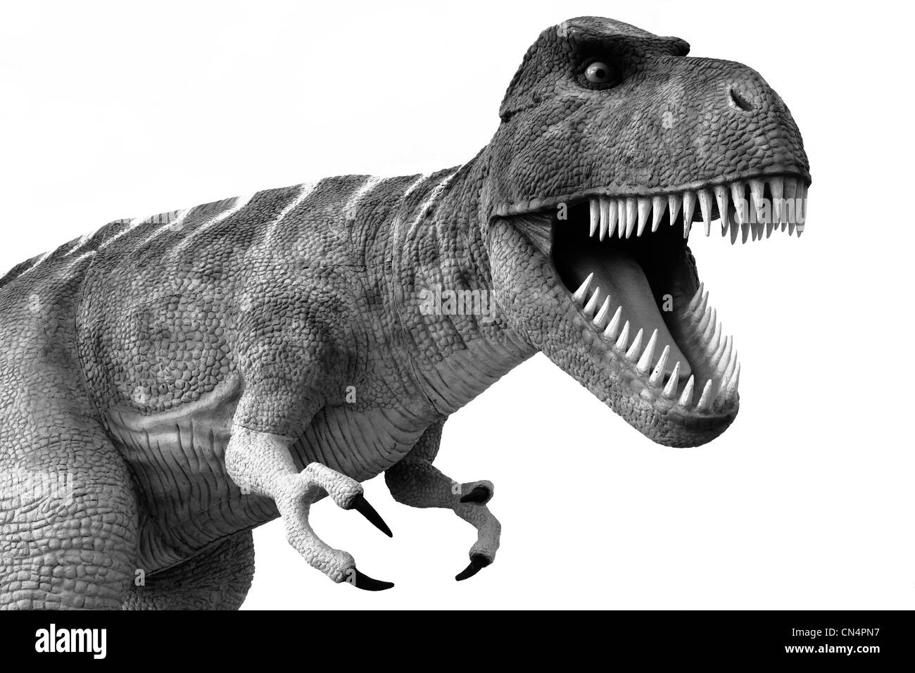 Menacing Tyrannosaurus Rex dinosaur - Stock Image