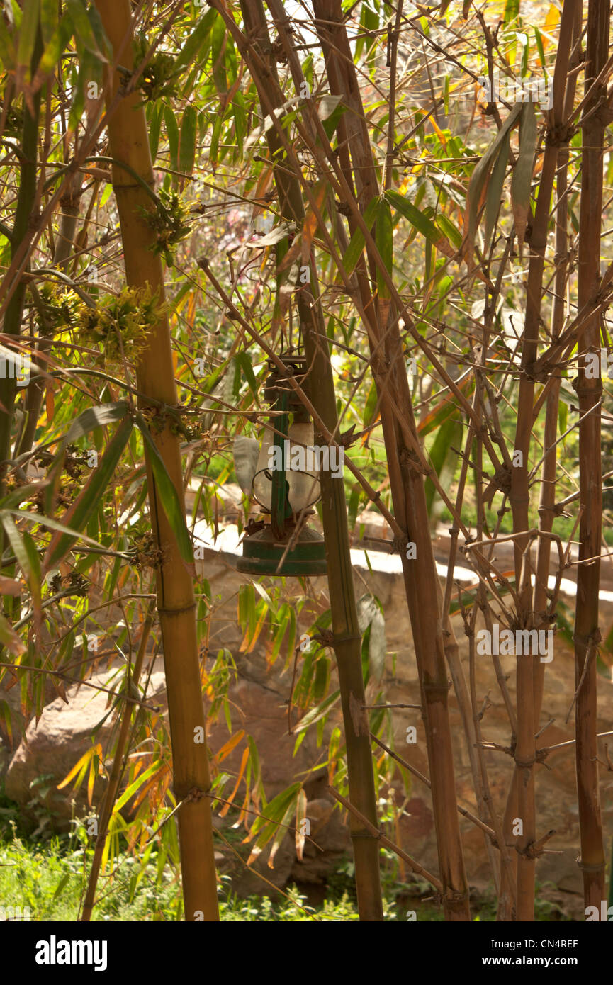Kerosene lamp amidst bamboo plants. This is useful at night, located close to a restaurant, since it provides ambience - Stock Image