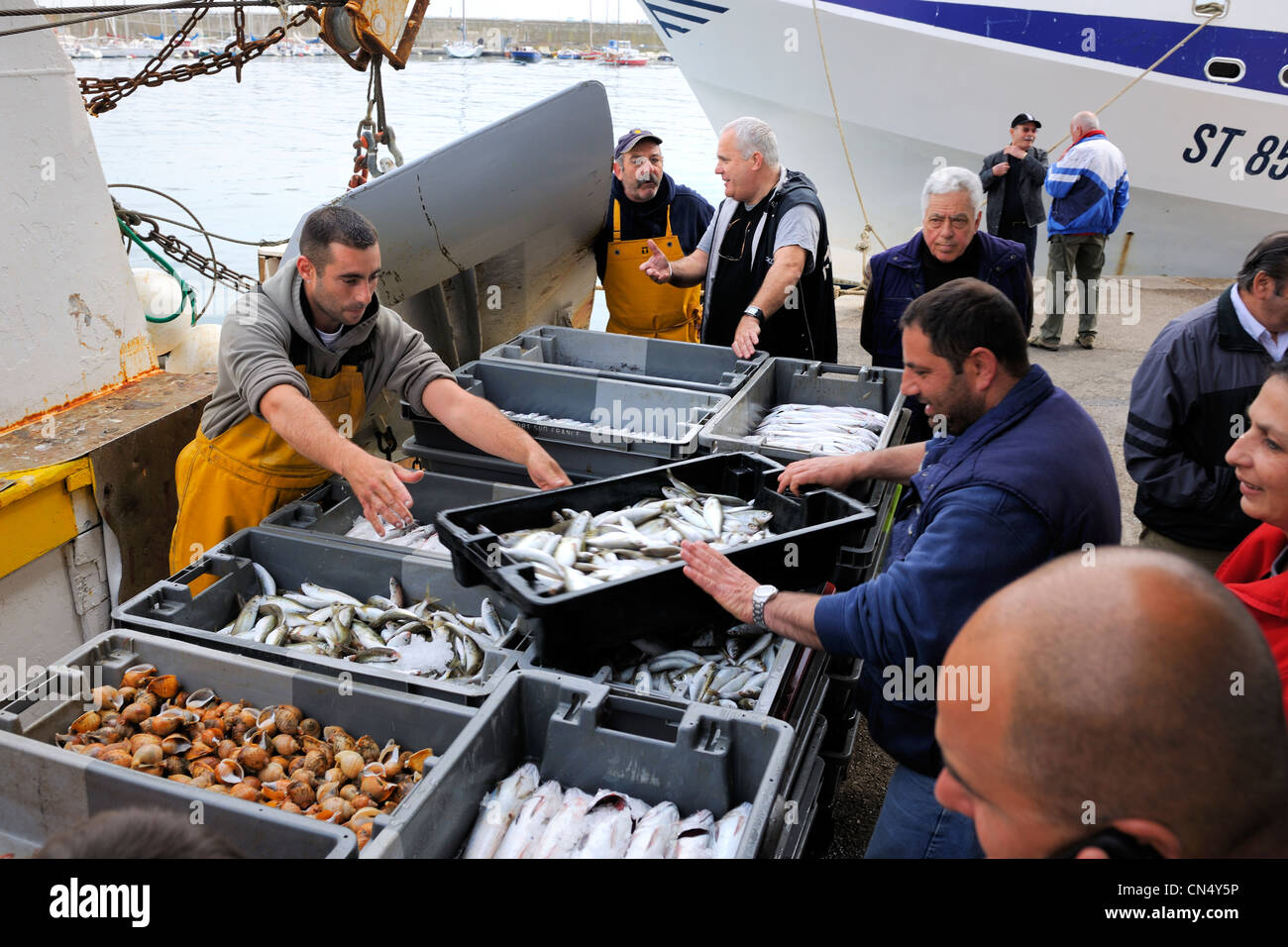 France, Herault, Sete, the fish auction market, fishery disembarkation - Stock Image