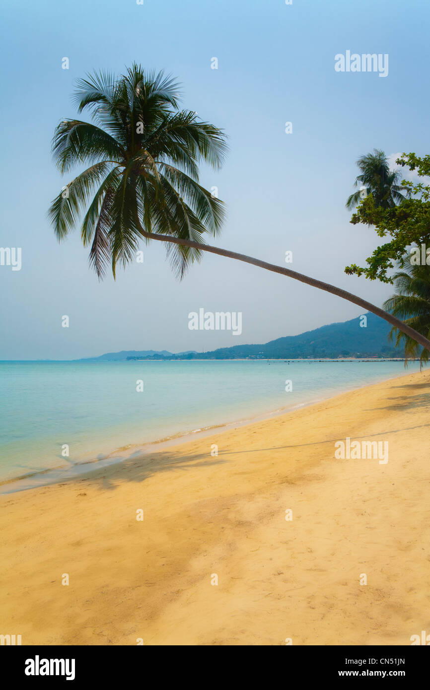 A palm tree leans over a beach of golden sand . A calm smooth turquoise sea under a cloudless sky on the Thai island - Stock Image