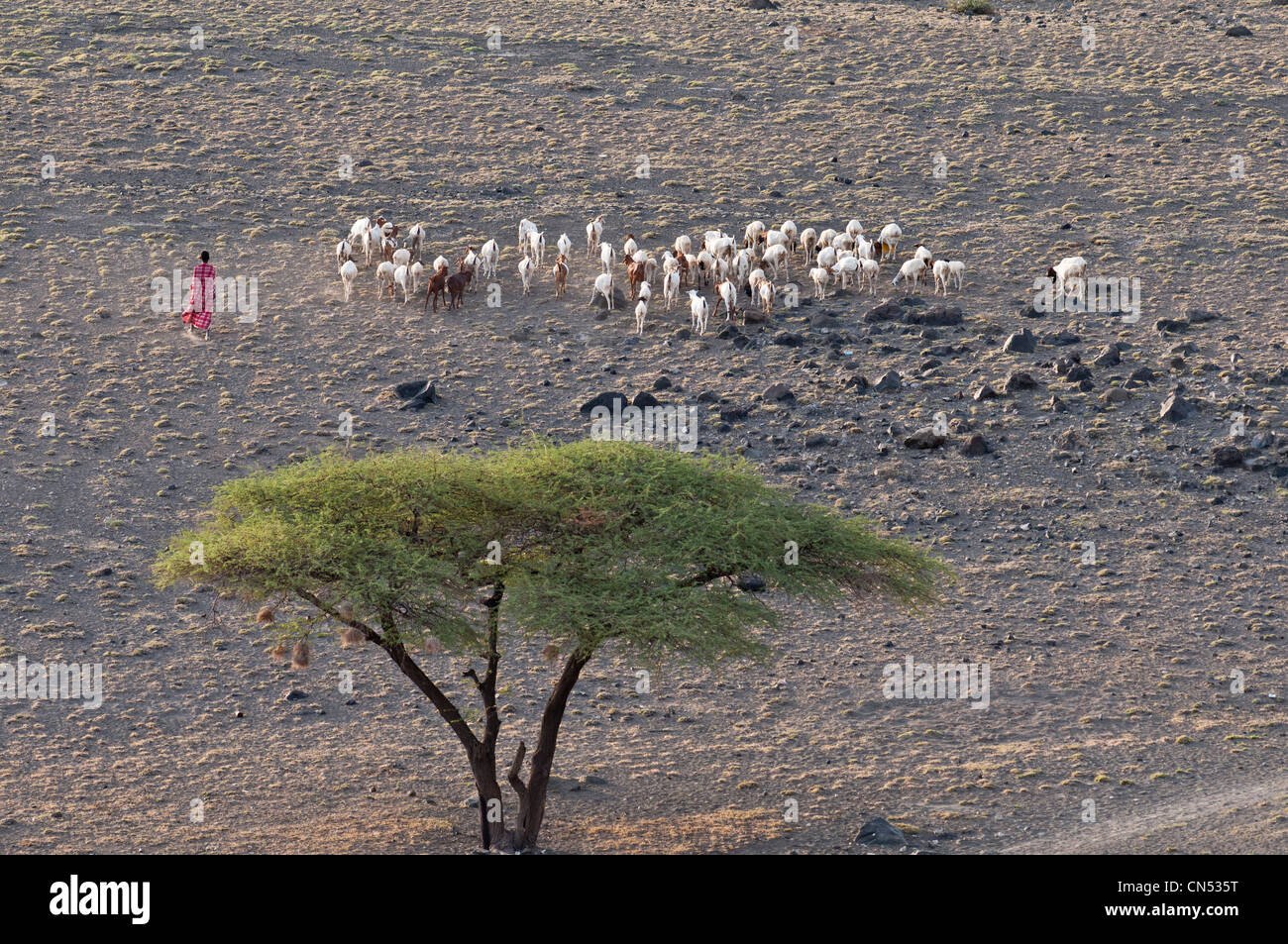 Tanzania, Arusha Region, Rift Valley, surroundings of lake Natron, Maasai shepherd Stock Photo