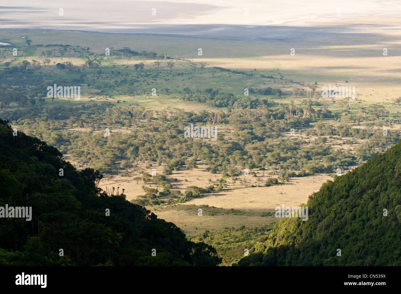 Tanzania, Arusha Region, Ngorongoro Conservation Area, listed as World Heritage by UNESCO, panoramic view over the - Stock Image