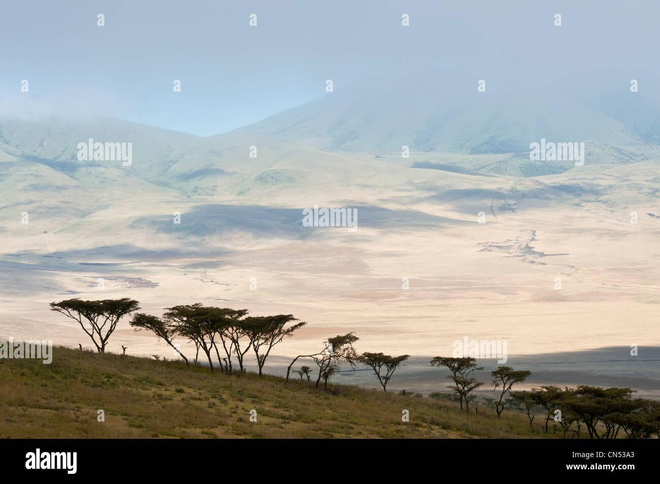 Tanzania, Arusha Region, Ngorongoro Conservation Area, listed as World Heritage by UNESCO, on the edge of the Ngorongoro - Stock Image