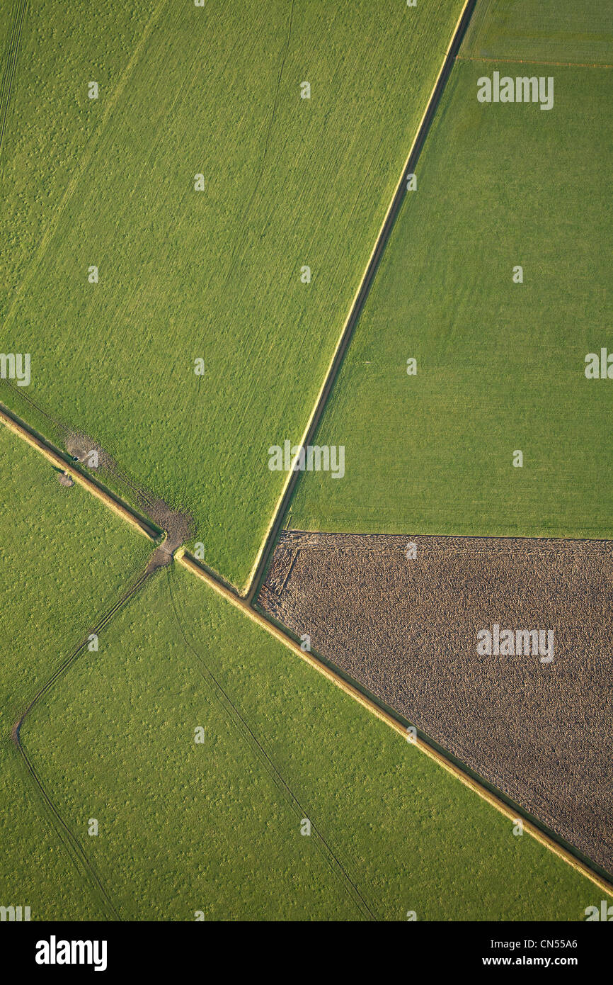 Netherlands, North Holland, Texel, cultivated field on the island (aerial view) - Stock Image