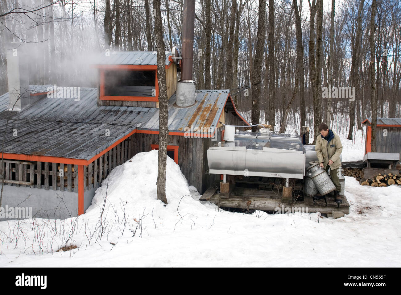 Man pouring maple water in a tank to make maple syrup sugar cabin man pouring maple water in a tank to make maple syrup sugar cabin st mathieu du lac la mauricie county quebec ccuart Image collections