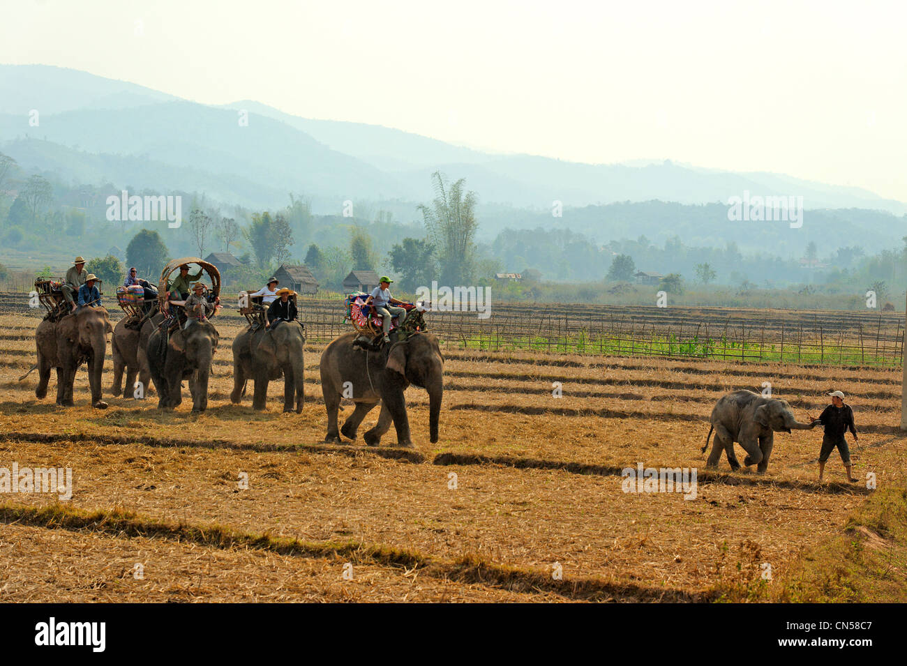 Laos, Sainyabuli Province, Hongsa, trek on elephant's back in rice fields - Stock Image