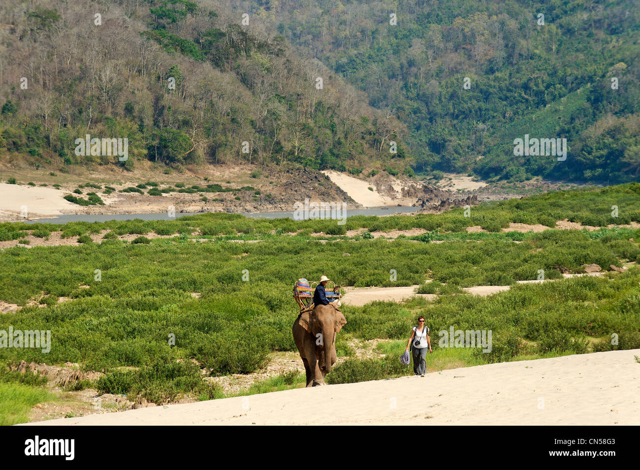 Laos, Sainyabuli Province, Mekong River, trek on elephant back, walking on a sandbar - Stock Image