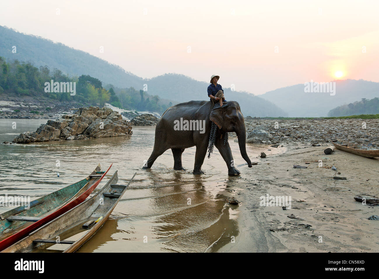 Laos, Sainyabuli Province, Mekong River, trek on elephant back, return of morning dip of elephants for the departure - Stock Image