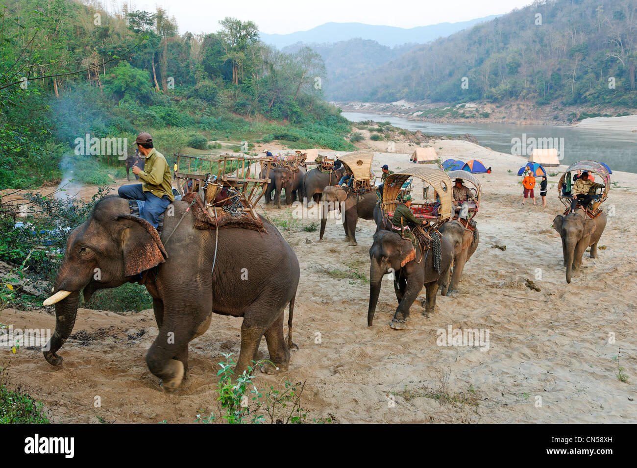 Laos, Sainyabuli Province, Mekong River, trek on elephant's back, departure of the caravan from the bivouac - Stock Image