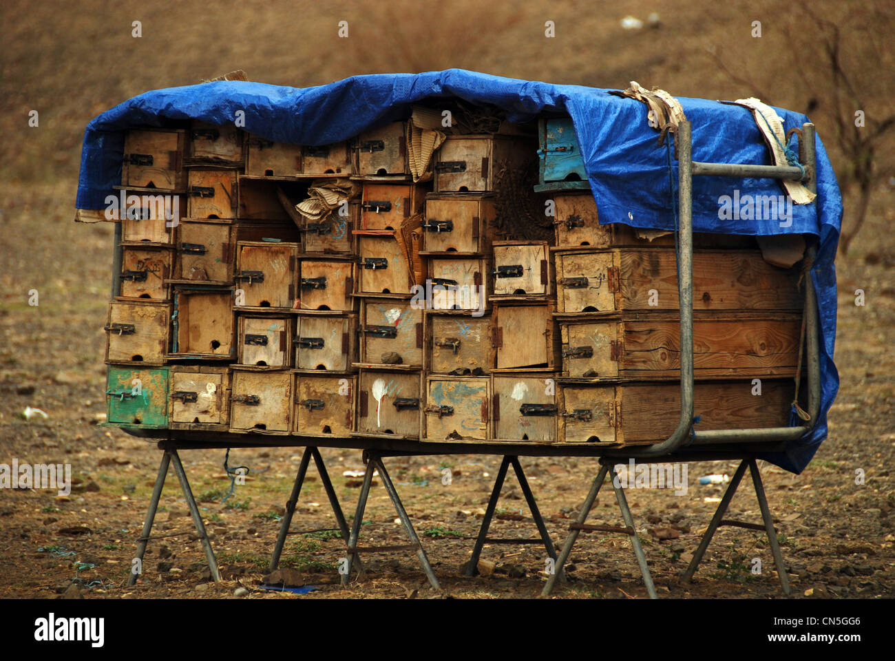 Yemen, inland, local handmade beehives in the countryside of Yemen near Sanaa, consisting of small wooden boxes, - Stock Image