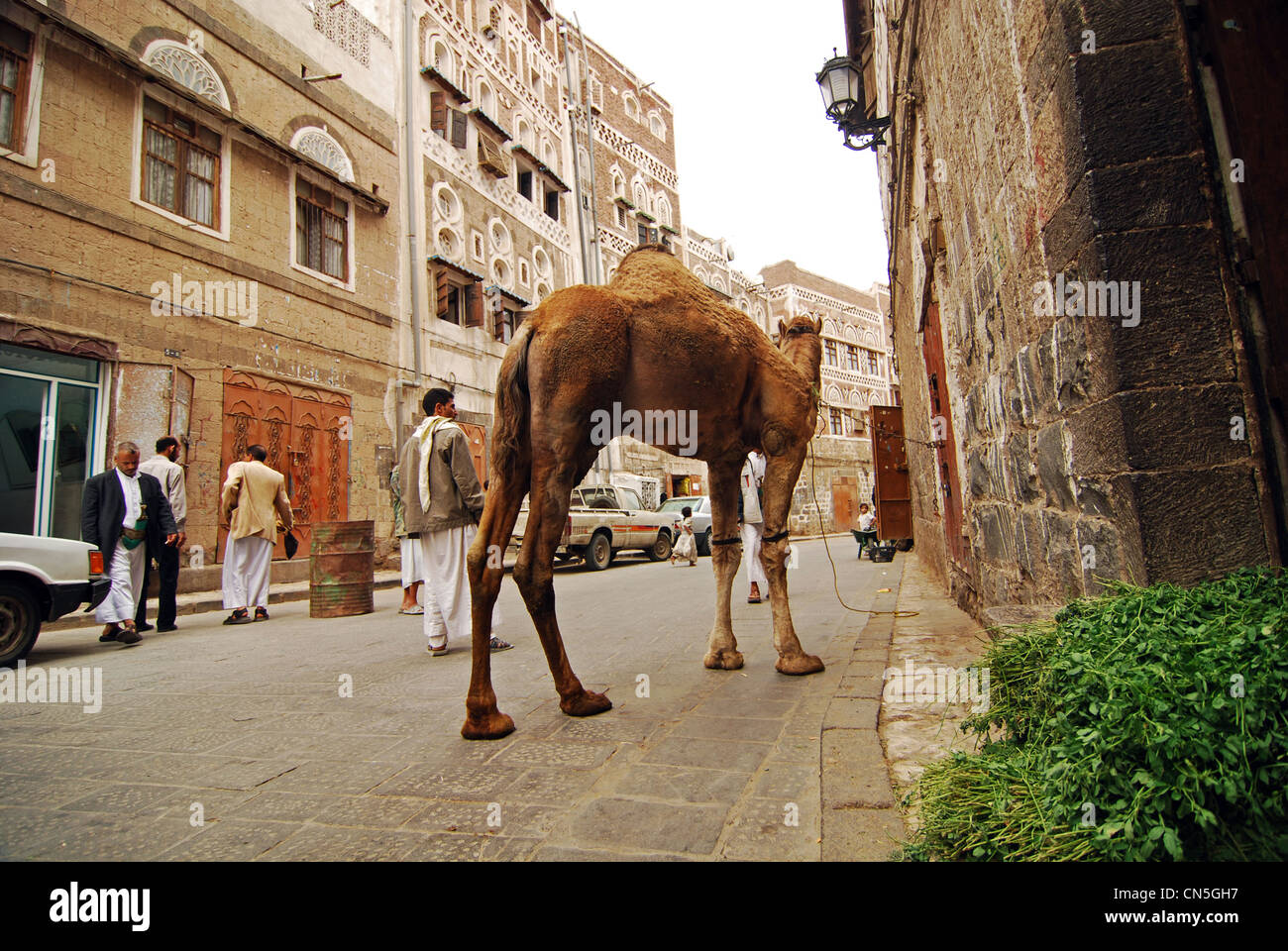Yemen, Sanaa, old town listed as World Heritage by UNESCO, people walking on street with camel - Stock Image