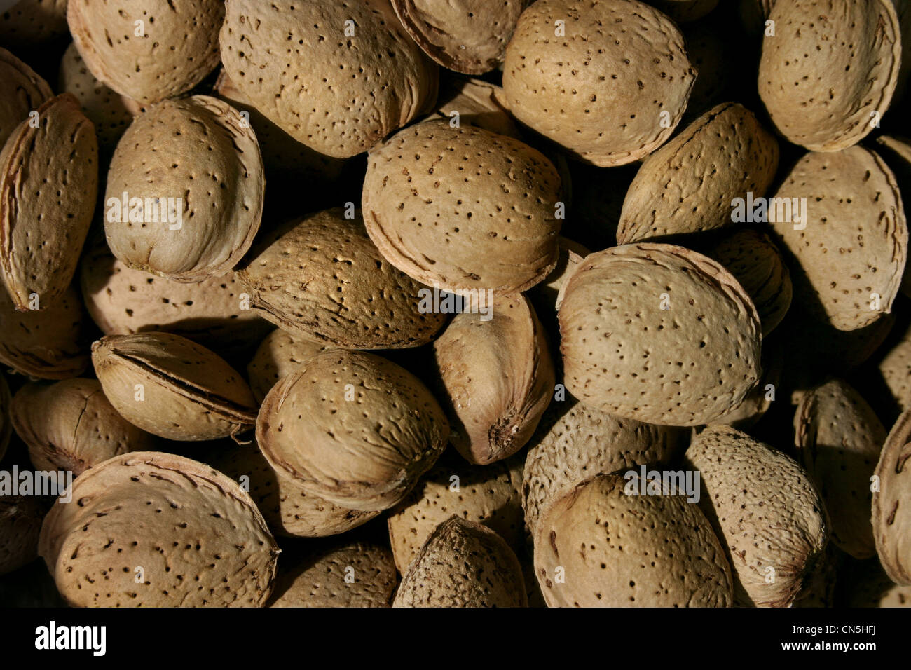 Picture: Steve Race - Freshly harvested Spanish Almonds. Stock Photo