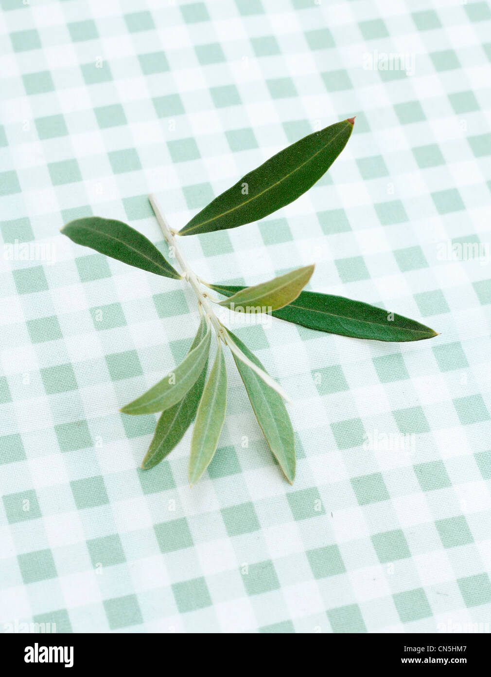 Olive Vector Stock Photos & Olive Vector Stock Images - Alamy