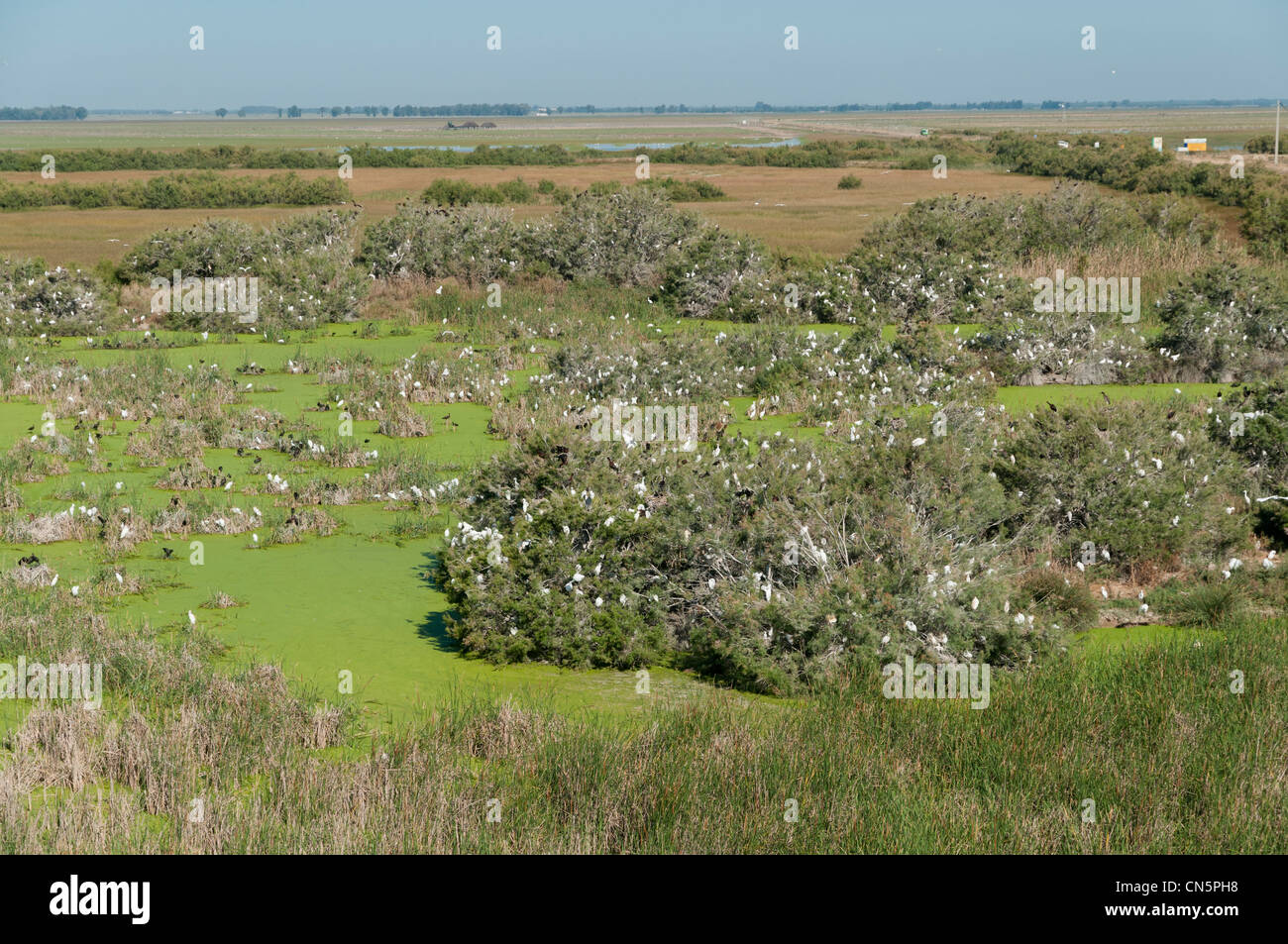 Aerial view in June of the nesting area of waterfowl and other wetland birds in Lucio de la FAO, Doñana, Spain - Stock Image