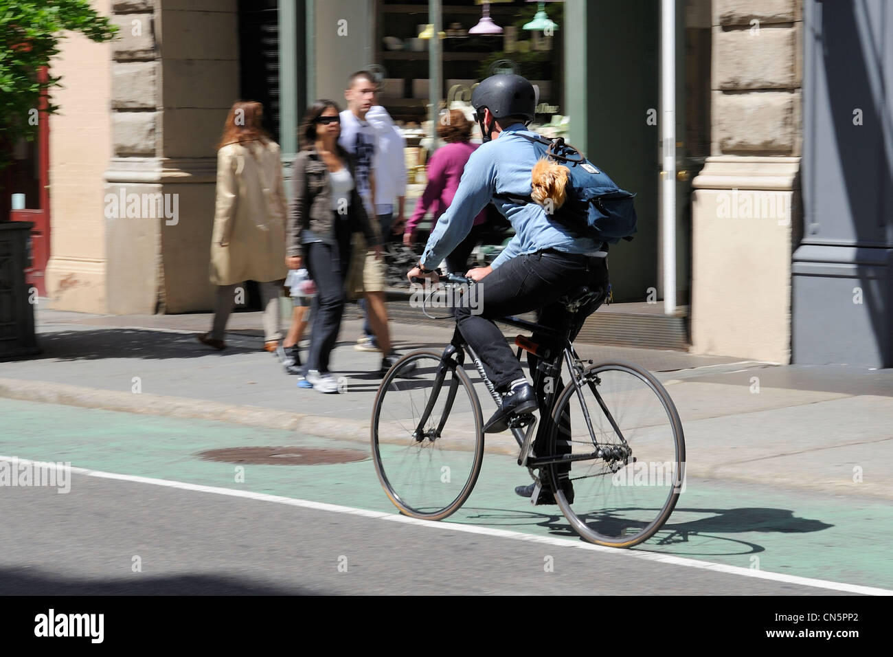 United States, New York, Manhattan, Soho, cyclist carrying his dog on Prince Street - Stock Image