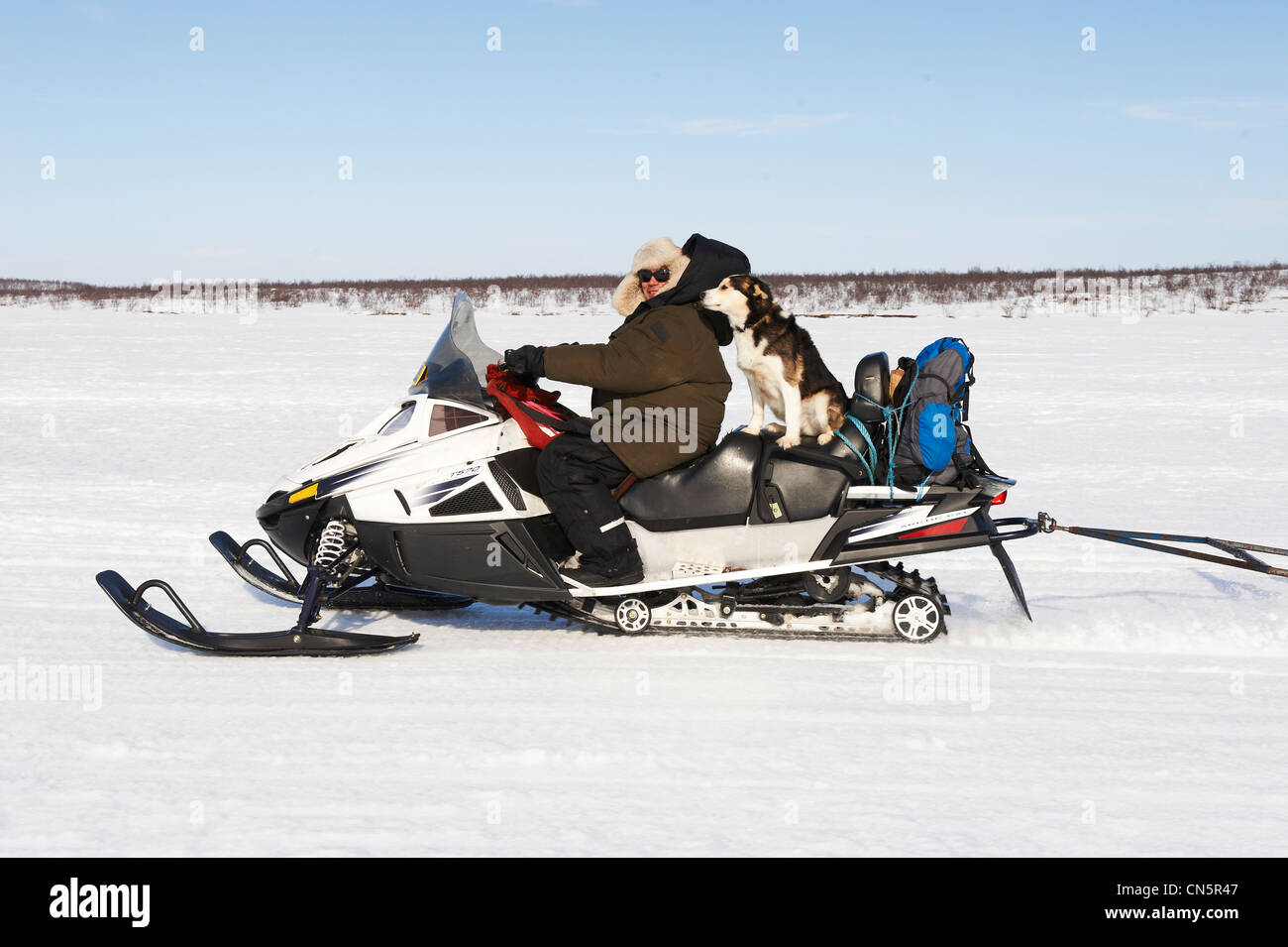 Norway, Lapland, Finnmark County, Karasjok, the great annual reinder migration the travel whit snow mobile to puttig - Stock Image