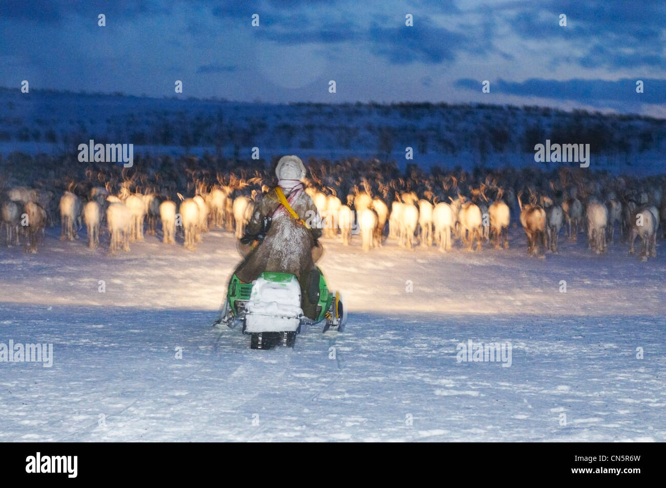 Norway, Lapland, Finnmark County, Karasjok, the great annual reinder migration, rounding up in the night - Stock Image