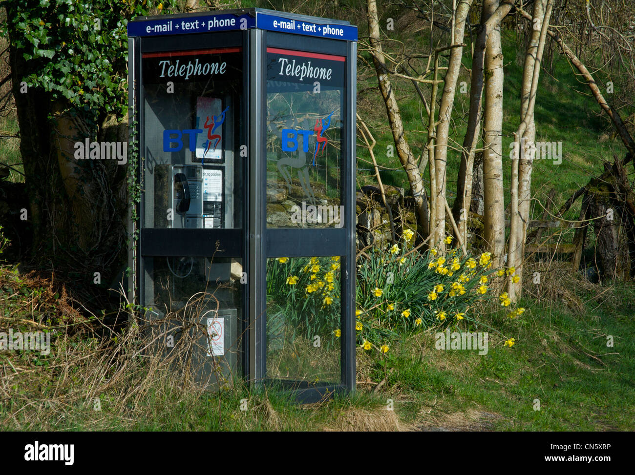 BT Phone box and daffodils in the Winster valley, Lake District National Park, Cumbria, England UK - Stock Image